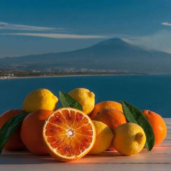 Gli agrumi siciliani si contraddistinguono nel mercato internazionale in quanto vantano proprietà organolettiche uniche al mondo.