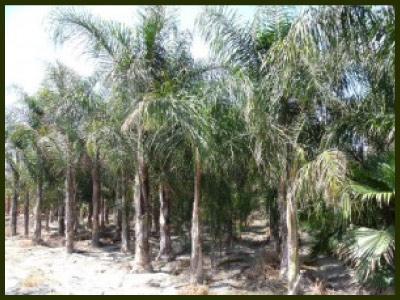 Viveros emilio d az viveros y silvicultura plantas for Vivero plantas tropicales