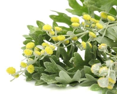Davana is a small plant  with the oil coming from the leaves and stems.  Its odour is sharp, penetrating, powerfully herbaceous with a sweet balsamic, tenacious undertone.