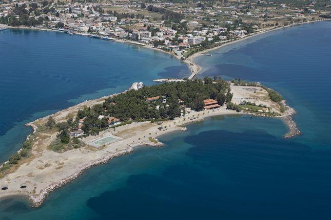 Evia natural beauty, archaeological sites, museums, the unique tidal phenomenon Euripus, explicit spas, the famous Drakospita Karystia, the Petrified Forest /Kerassia's Museum of Fossils Vertebrates