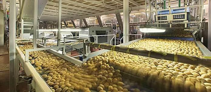 Produzione kiwi