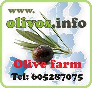 Fincas rústicas de olivar, riego por goteo, tradicional, intensivo y superintensivo.