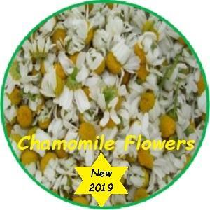 Chamomile; (Matricaria chamomila)