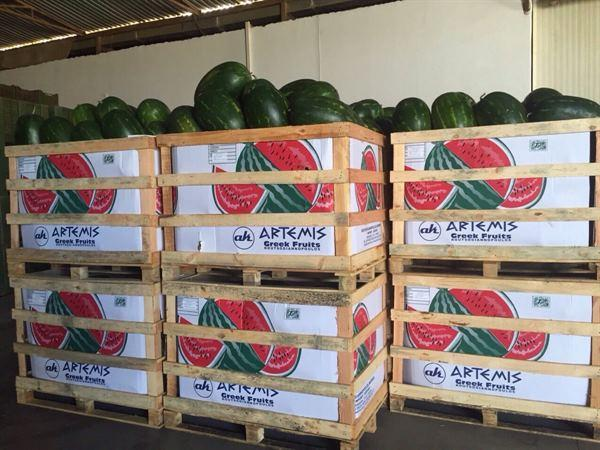 Watermelons in Crates