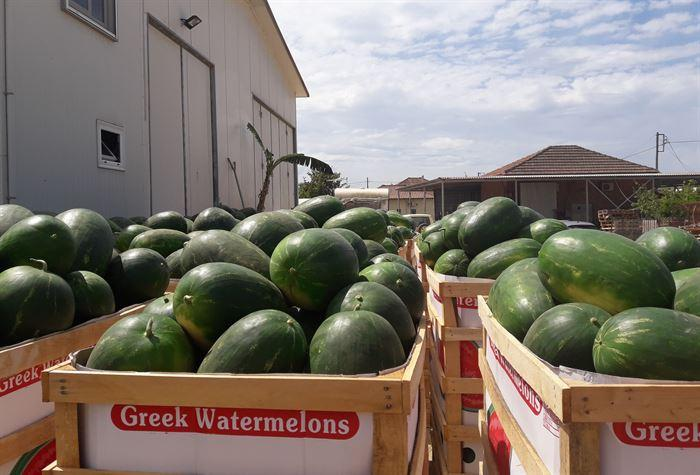We deal  with the best Greek watermelon farmers in Ilia Peloponnese Greece and deliver LONG SHAPE watermelons, ROUND type watermelons at quantities you like