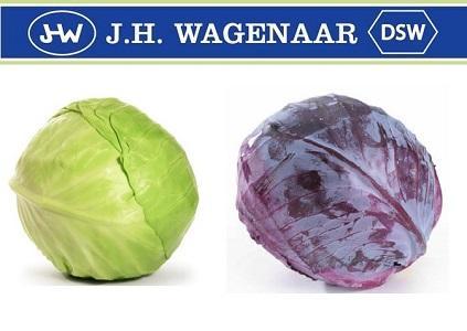Cabbage Krauten