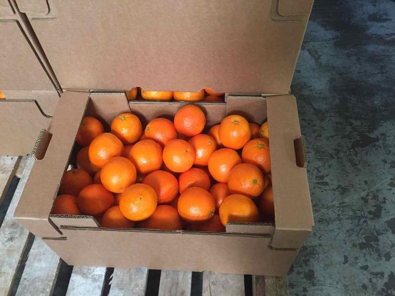 Juice-Oranges