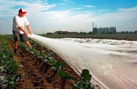 Kleinmazige netten en vliesdoek om gewassen te beschermen tegen weersomstandigheden, insecten, klein wild en onkruid.