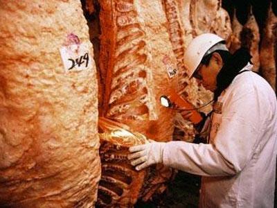 Productos típicos de España Jamones,Quesos,Carnes todo productos Gourmet para exportación en Grupaje a toda Europa y otros Continentes