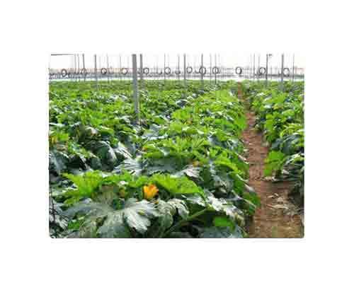 Abonos y productos para enriquecer los suelos