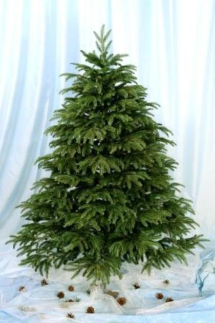 Firs of our production is the best choice for the home. Environmentally friendly and very similar to living trees. Order by phone +380671790860 .