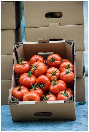 Tomatoes Siluet