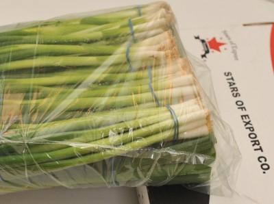 STARS OF EXPORT started exporting Spring Onions In 1995 with 120 tons shipped by air to England and Denmark , the planted area was around 70 acres , Today the planted area is larger , it's about 450