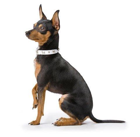 Colliers et laisses façon cuir  chien et chat www.romiaqs.com