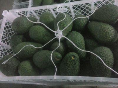 Avocat hass Morocco prodcut