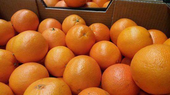 juicing-oranges-for-automatic-juicers