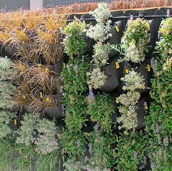 Instala un jardín vertical en tu propia casa, con nuestro exclusivo sistema CARA DE PLANTA lo puedes hacer tú mismo o nosotros lo haremos por tí. www.ignasiconillas.com
