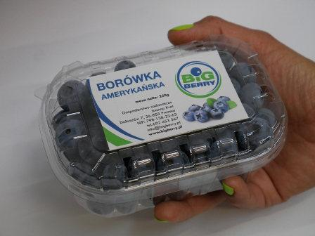 Blueberry punets