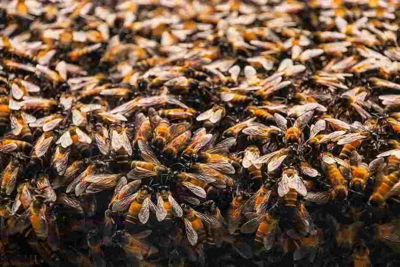 Miel sans pesticides