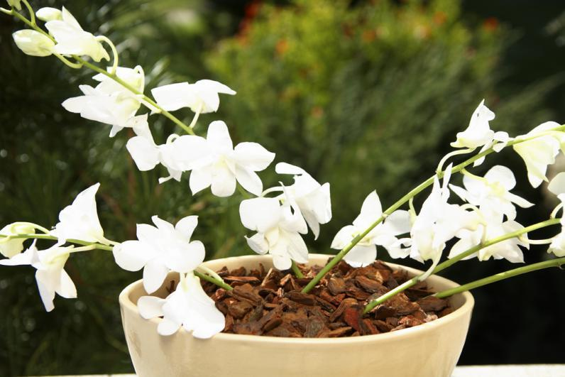 Our PREMIUM MARITIME PINE BARK is suitable for orchids. Maritime bark is the one with less tanin content and our manufacturing process allows us to serve a really high quality ORCHID GROWING MEDIA