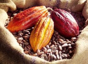 SOGRAIM, société d'exportation des grains de Madagascar cherche des clients pour acheter une grosse quantité de fève de cacao originaire de madagascar. Offre valable sur toute l'année.