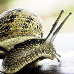 lumache caracoles escargot snails