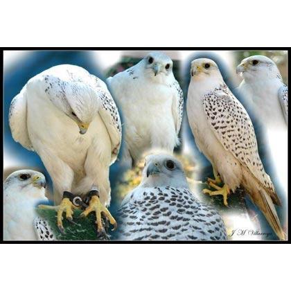 Aves de corral, conejos y caza: cría