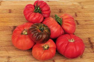 Seeds for heirloom tomatoes, hanging basket, outdoor, glasshouse, plum, cherry, grape, currant, beefsteak and patio varieties