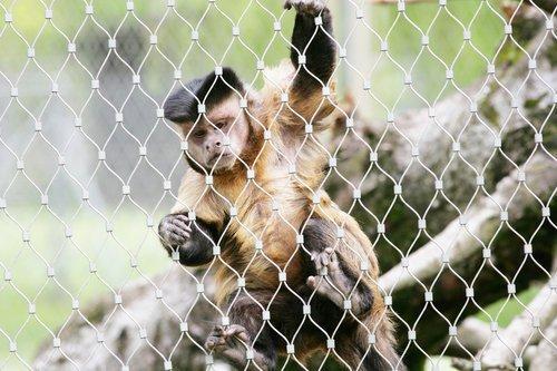 Affenhaus Zoo, Basel, Schweiz