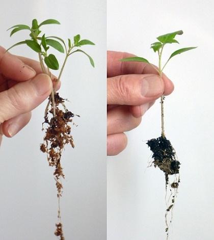 idrogel gel idroretentore fertilizzanti concimi