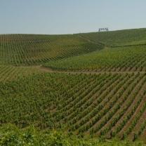 Vale de Cavalos vineyard