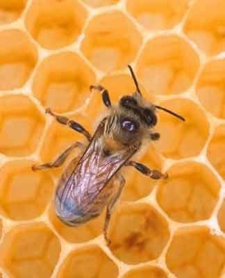 API BRESCIA SOC.COOP.R.L. Ha lo scopo di promuovere i prodotti dell'apicoltura e dei prodotti dell'alveare.