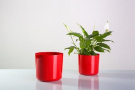 Plastic flowerpots sizes diam 12and 14