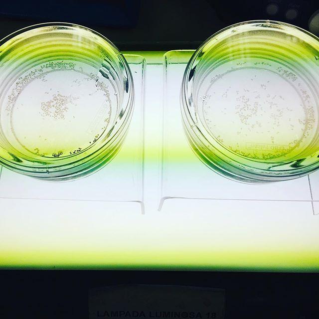 Chemica lab