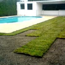 Pose de pelouse en rouleau ou pelouse semée.