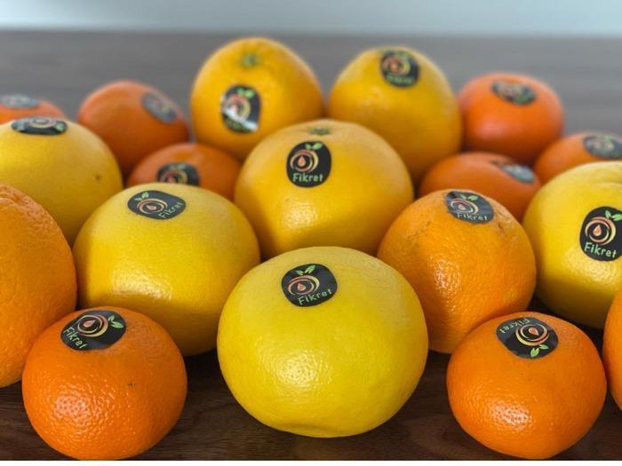 White Marsh Seedlees Grapefruit