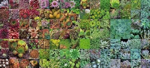Grüner Lärmschutz