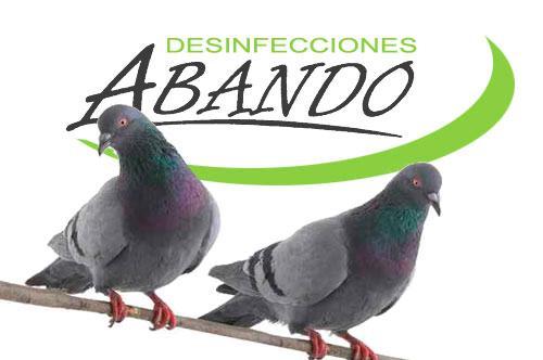 Control de plagas de palomas en Bilbao y poblaciones de Bizkaia. Métodos para control de aves y palomas. Medidas de captura y para ahuyentar palomas de edificios, monumentos y plazas.