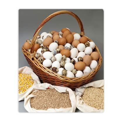Huevos. Granja Agas