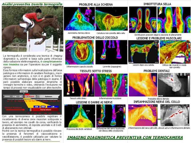 Analisi termografica in ambito equino. Una tecnica di diagnosi completamente non invasiva che permette di riscontrare immediatamente la presenza di infiammazioni muscolo scheletriche e/o articolari