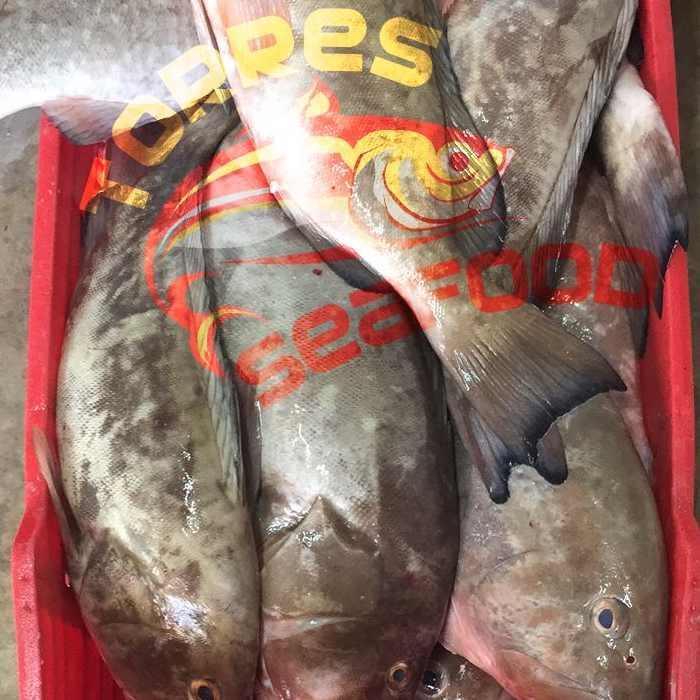 Conocido como Mero Americano y Mero Rojo, pescado en las costas del estado de Yucatán, calidad de primera.