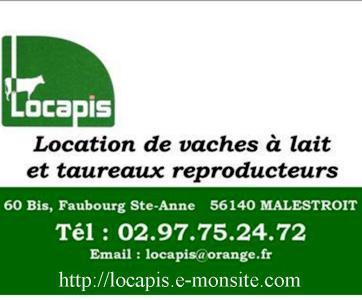 LOCAPIS la location de vaches laitières ou taureaux reproducteurs