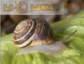 snails caracoles easargot lumache
