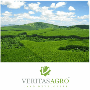 Brasilian Reforestation