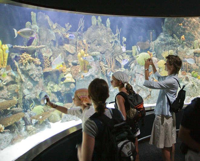 Bio Cenografia.Loro parque.Tenerife aquariums, Spain