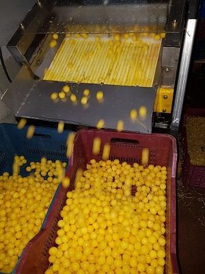 fruit processing companies