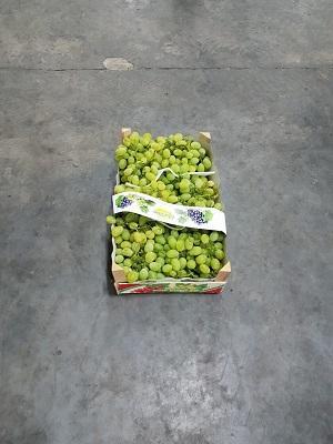 виноград от производителя