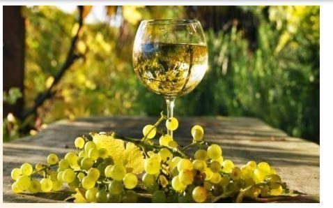 Cantine Introvigne è al passo con le nuove tecnologie per soddisfare la richiesta, sempre più competente, di vini che siano di ottima qualità.