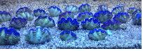 tridacna from redsea, redsea fishs