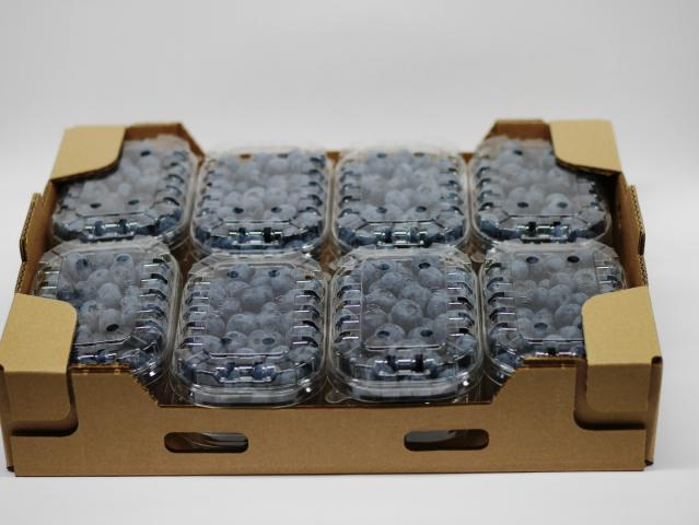 Blueberry punets 8x250g
